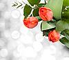 Bouquet of tulips | Stock Foto