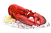 Lobster on ice isolated on white | Stock Foto