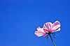 Photo 300 DPI: Pink flower against the blue sky