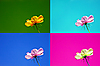 Photo 300 DPI: Postcards in four different colors with delicate flower.
