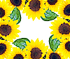 Frame of sunflower | Stock Foto