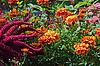 Piękne kwiaty, jesienią | Stock Foto