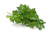 Sprig of parsley | Stock Foto