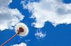 Dandelion on blue sky | Stock Foto