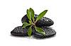 少数的石头,绿色的植物 | 免版税照片
