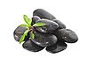녹색 식물 돌의 소수 | Stock Foto