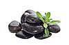 少数结石年轻的绿色植物。 | 免版税照片