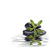 젊은 녹색 식물 돌의 소수. | Stock Foto