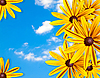 Frame of yellow flowers against the blue sky | Stock Foto