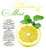 Lemon and mint   Stock Foto