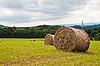 在阳光明媚的日子秸秆在该领域的劳斯莱斯 | 免版税照片