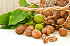 Walnuts with green leaves and immature fruit | Stock Foto