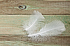 나무 보드에 흰색 깃털 | Stock Foto