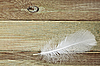 Photo 300 DPI: White feather on board