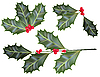 Vector clipart: holly leaves and berries