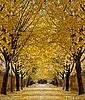 Photo 300 DPI: Autumn alley