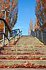 楼梯与红叶在阳光明媚的日子 | 免版税照片