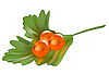 Vector clipart: Red caviar on parsley