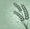Vector clipart: Ear of wheat in grange background