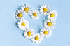 ID 5790463 | Frame of flowers daisies in shape of heart on blue | High resolution stock photo | CLIPARTO