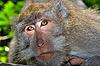 호기심 원숭이 | Stock Foto