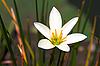 白色的热带花卉 | 免版税照片