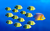 Leadership concept - fish leading | Stock Foto