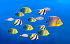 Leadership concept - big fish leading | Stock Foto