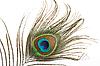 ID 3015593 | Pawie pióro z bliska | Foto stockowe wysokiej rozdzielczości | KLIPARTO