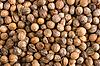 Pile of coriander close up  | Stock Foto