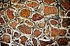 Texture of stone wall of ancient Mayan ruins | Stock Foto