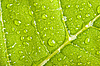 Green leaf with water droplets | Stock Foto