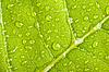 Зеленый лист с каплями воды | Фото