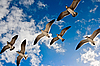 Photo 300 DPI: Seagulls flying in the air