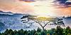 ID 5433308 | 언덕에서 일출 외로운 나무 | 높은 해상도 사진 | CLIPARTO