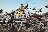Photo 300 DPI: Boudha Nath (Bodhnath) stupa flight of doves, Nepal