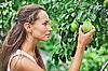ID 3016786 | Schöne Frau, Kommissionierung die Birne im Garten | Foto mit hoher Auflösung | CLIPARTO