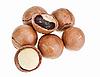 澳洲坚果去壳和带壳 | 免版税照片