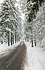 Winter road in snow-covered forest | Stock Foto