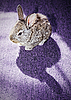 ID 3016978 | Kaninchen auf dem Teppich | Foto mit hoher Auflösung | CLIPARTO