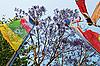 푸른 하늘 및 나무의 앞에 색깔의기도 깃발 | Stock Foto