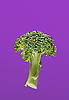 ID 3017016   Green broccoli on violet in water   High resolution stock photo   CLIPARTO