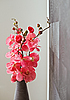 Pink orchid flowers in wicker withe vase | Stock Foto