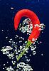 辣椒气泡在水中 | 免版税照片