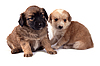 ID 3017314 | Two little dogs | High resolution stock photo | CLIPARTO