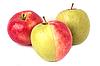 ID 3017502 | Czerwone i zielone jabłka | Foto stockowe wysokiej rozdzielczości | KLIPARTO