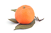 Ripe mandarine   Stock Foto