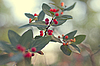 Branch of beautiful red wild berries, with beautiful green backg | Stock Foto
