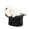 Królik na czarny kapelusz | Stock Foto