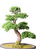 ID 3019665 | Bonsai tree | High resolution stock photo | CLIPARTO